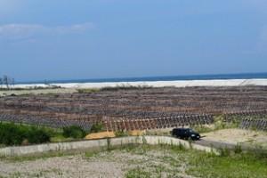 ⑩名取市閖上地区 海岸林および海岸堤防の整備状況